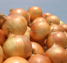 best quality fresh cheapest yellow onion for new crop