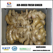 buy fresh ginger from china