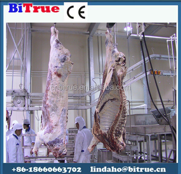 cattle meat processing beef slaughter plants