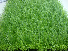 Top Sale landscaping turf for pets