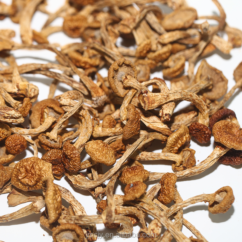 2017 New butterscotch mushroom used in stir-fries