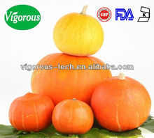 High Quality Marrow Squash Extract