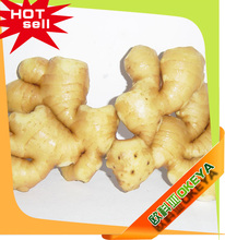 Ginger Buyers, Fresh Ginger, Dried Ginger(whatsapp:008618766199504,email:kevin@okeya.cn)