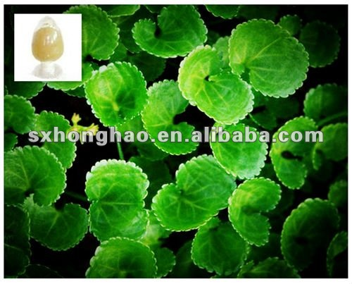 Top Quality Total Triterpenes 10% -90% Centella asiatica Extract