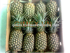 fresh pineapple 2015 VN
