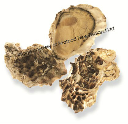 Live New Zealand Pacific Oyster