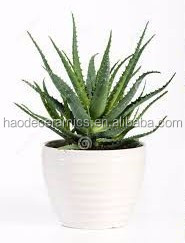 [ ZIBO HAODE CERAMICS]manufacturer supply ECO-friendly glazed striped design white flower pot for indoor green plant
