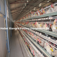 hot sale livestock chicken farming for layer