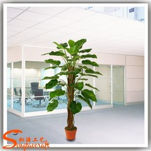 types of artificial evergreen houseplant dracaena fragrans indoor ornamental foliage plants