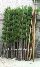 Customized outdoor 800cm Artificial bamboo fake tall bamboo for swimming pool wall landscape decoration artificial bamboo plant