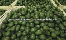 FRESH AVOCADO - DELICIOUS, BEST PRICE FOR NOW