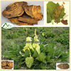 Wholesale Natural Sex Herb Medicine Rheum Officinale
