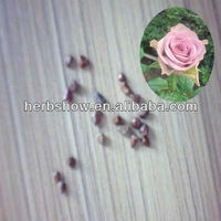 High germination Rose Flower seeds for Home and garden