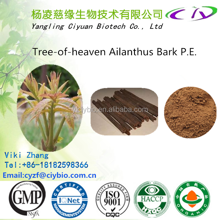Natural Cortex Ailanthi Extract / Ailanthus Bark Extract / bark of tree of heaven extract 5:1 10:1 20:1