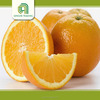 Hot selling frozen orange juice concentrate with low price
