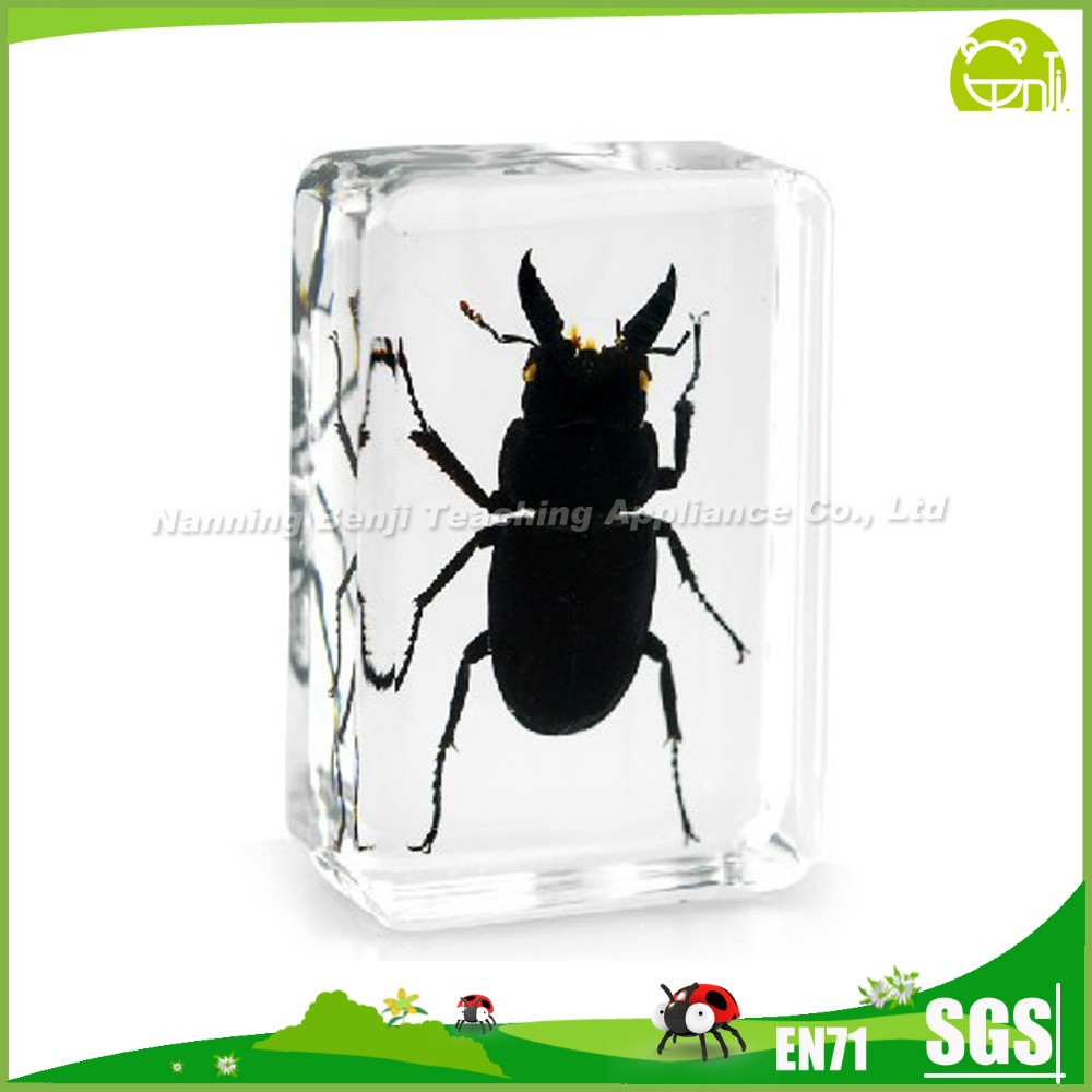 Real Bug Paperweight-Small Black Stag Beetle