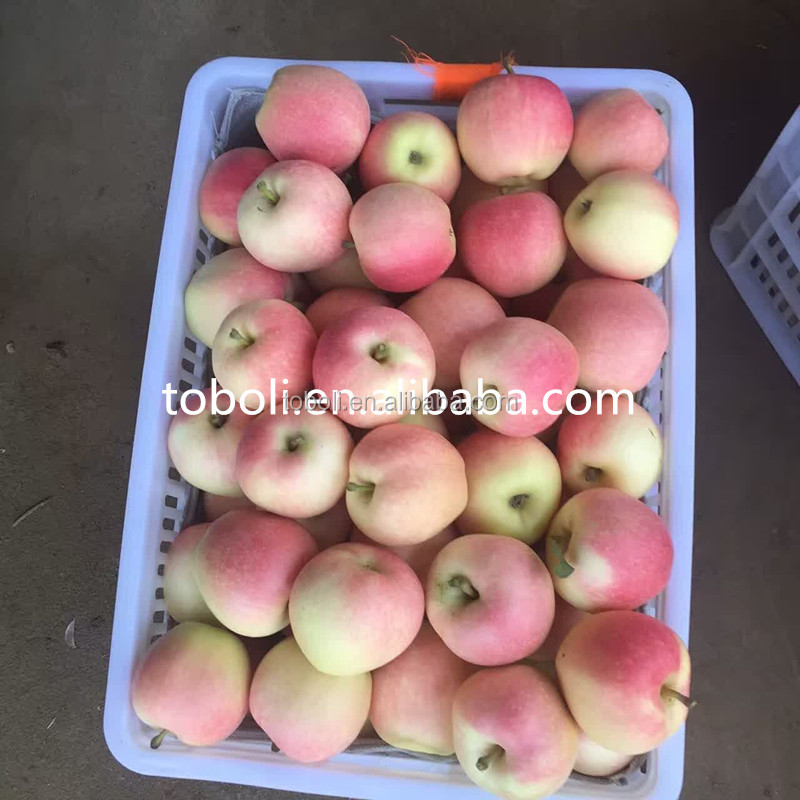 Gala Variety and Common Cultivation Type best price gala apple