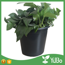 Made in china 10 gallon black plastic new product big tree plant gallon pots for outdoor