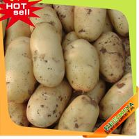 Okeya Plant Base seed potatoes for sale holland