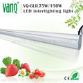 VANQLED Distributor Grow Light for Greenhouse 75w for interlighting Cucumber/Tomatoes