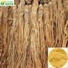 100% Natural green plant extract angelica extract
