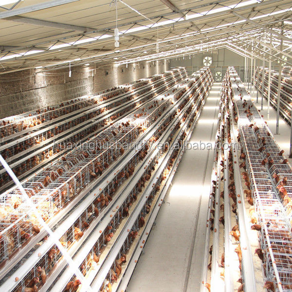 Automatic Vertical chicken layer cage/chicken egg poultry farm design
