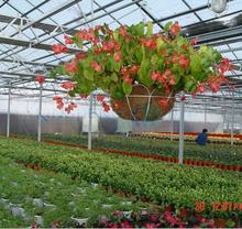 Plants Growing Polycarbonate Panels Green house