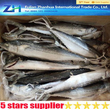 New arrive !frozen spanish mackerel fish for sale,frozen food.fish frozen.