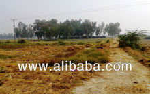 73 acres fully developed land 20 minutes from DHA Lahore, Pakistan
