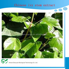 Chinese Ivy Stem Extract from GMP Supplier/84082-54-2