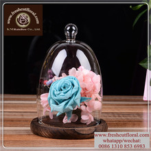 Wholesale Plastic Cloche Bell Jar For Flower Store