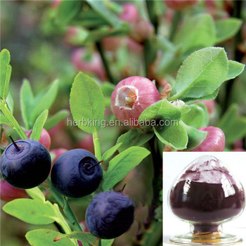 Blueberry powder extract Anthocyanidin25% from natural Blueberry