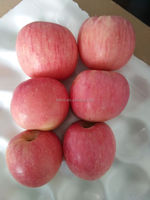 select the good quality fuji apple from Shandong province