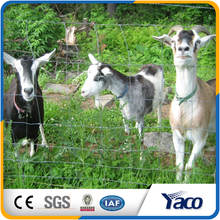 Hot Dipped galvanized wire material and Farm Fencing for cotain goats, horse, deer