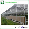 Good Quality Multi Span Polycarbonate Greenhouse
