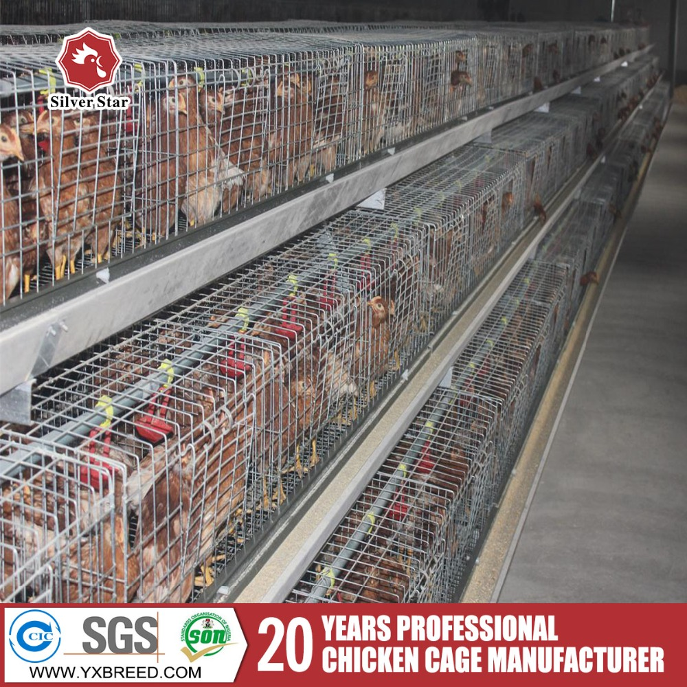 Automatic layer battery cage for chicken laying hens
