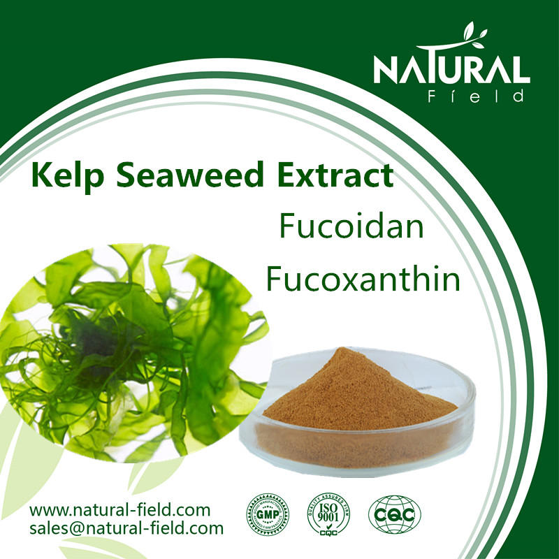 natural fucoxanthine powder of Laminaria japonica extract