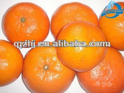Nice and Tasty Chinese Mandarin Oranges from China for Sales