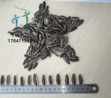 chinese sunflower seeds of 5009