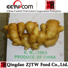 Low Price & Hot Sale Fresh Ginger,China Mature Fresh Ginger