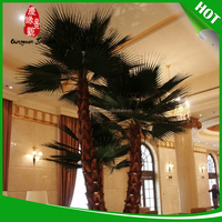 most popular palm tree buyers
