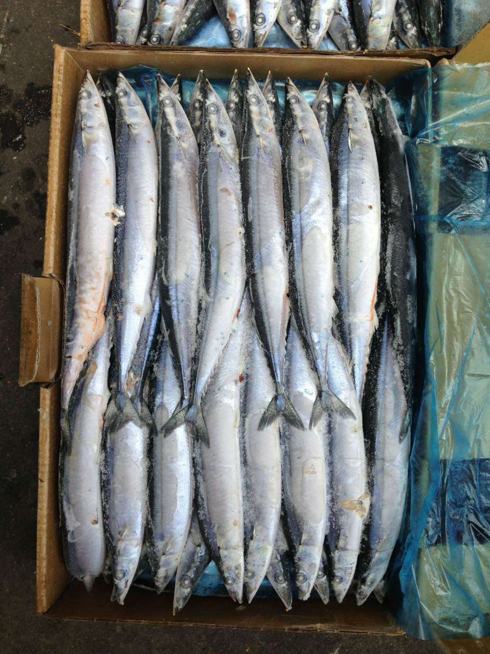 2017 Rusia Fresh Frozen Canned Pacific Saury Fish for market