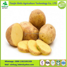 Organic large fresh chips potato