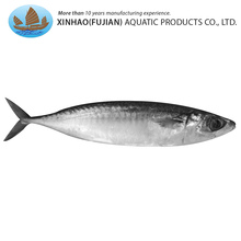 Factory wholesale local seafood catch fish mackerel