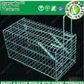 Humane rat trapping in live cage traps (HC2601M)