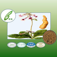 natural herb dried rehamnnia root extract to provide external treatment of plant extracts