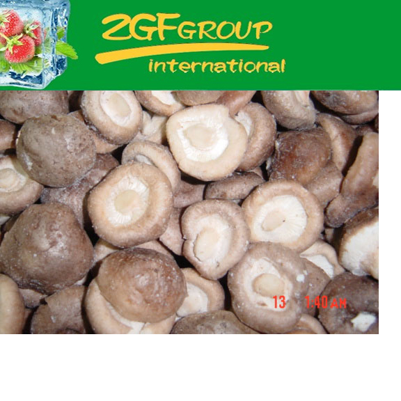 frozen mushroom substrate for sale