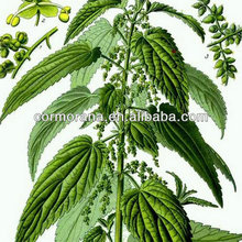 Pure Stinging Nettle Root Extract (Urtica Dioica), Silic Acid/B-sitosterol 5:1,10:1, 20:1