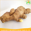 Chinese Professional Wholesales Price High Quality Fresh Yellow Mature Shandong Ginger