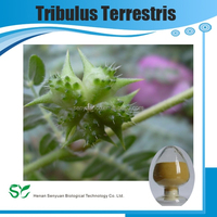 Tribulus terrestris extract saponins powder
